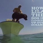 How Lila The Dog Is Cleaning Up Our Oceans!