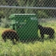 The 'Bear Resistant' BINPAK Compactor